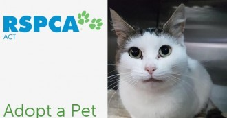 RSPCA ACT offers 50  off feline adoption fees
