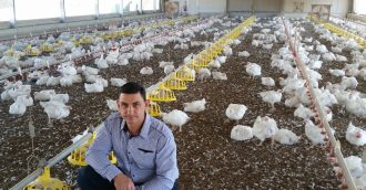 Why these chickens crossed the road for fresh start in Goulburn