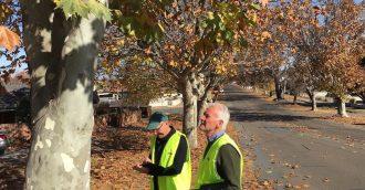 Street tree champions greening Goulburn