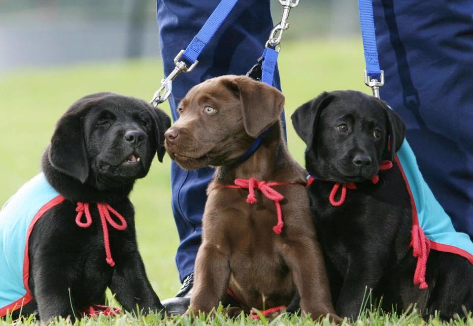 Integra Service Dogs Australia
