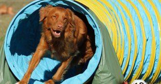 Canberra hosts International Dog Sports Extravaganza
