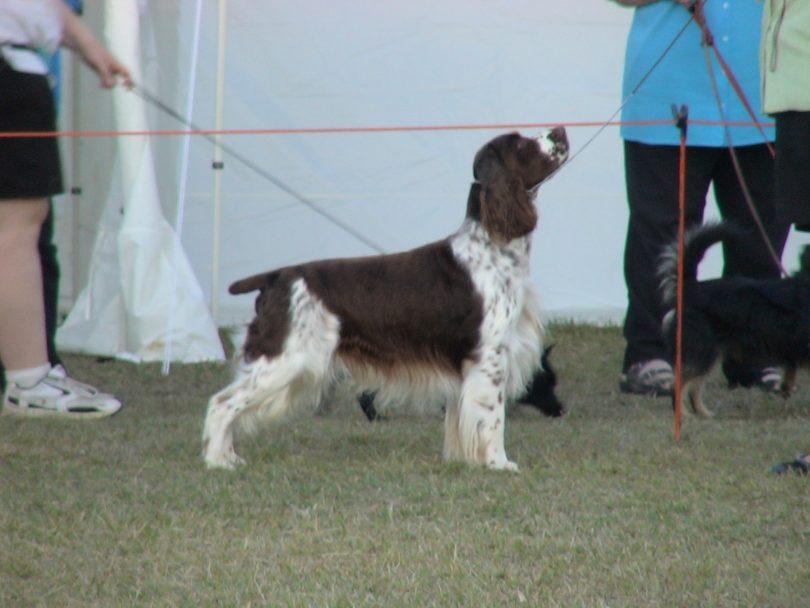 Dog Show Epic Canberra