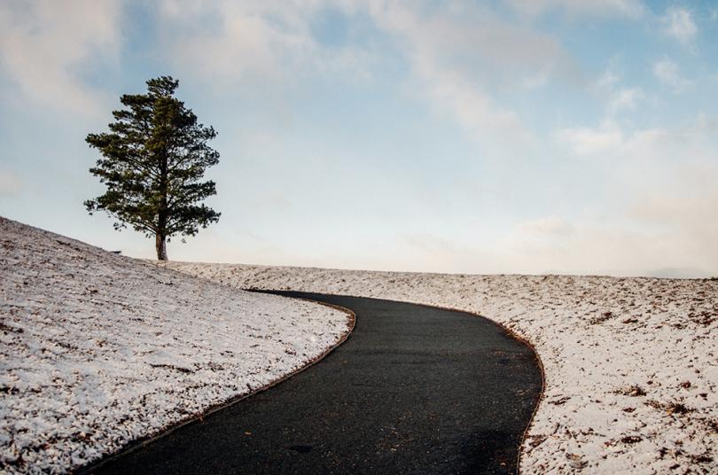 Snowy Arboretum