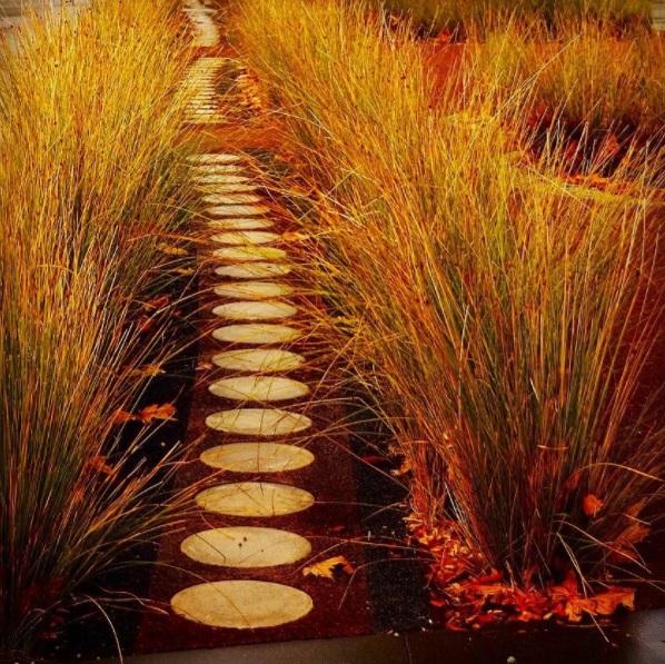 Photograph by Hou Leong - Australian native grass garden