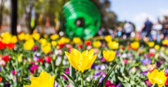 Floriade springs forth as sunny weather brings out the blooms and crowds