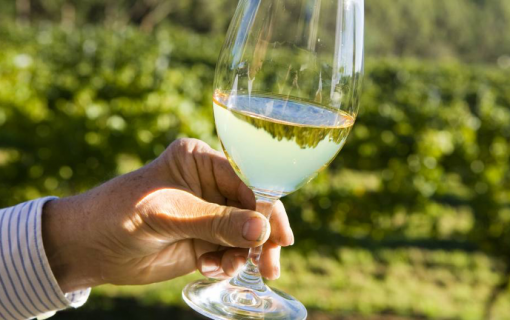 Canberra Day Trips: Lake George Wineries