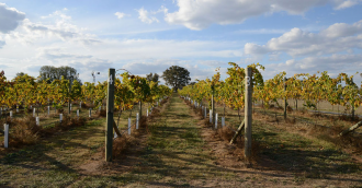 Canberra Day Trips  Murrumbateman Wineries