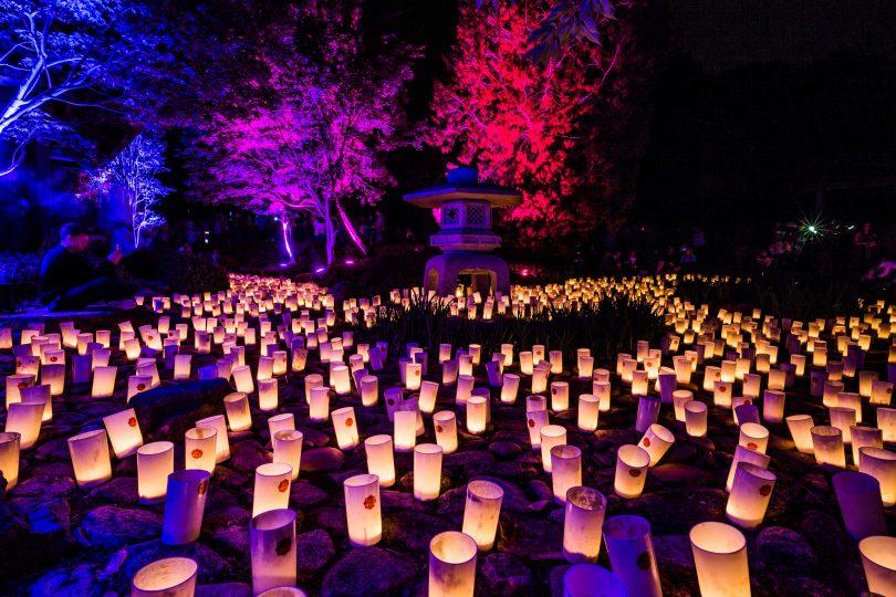 "Canberra Nara festival celebrates 25 years as sister cities with the soft light of 3,000 candles/在长达25年的""堪培拉奈良节""上,人们用3000支蜡烛的柔光来庆祝姐妹城市的诞生"