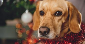 Christmas is a good time to discuss who will take care of your pet if you pass away