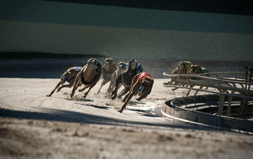 Canberra Greyhound Racing Club will continue its legal battle against the banning of greyhound racing in the ACT.