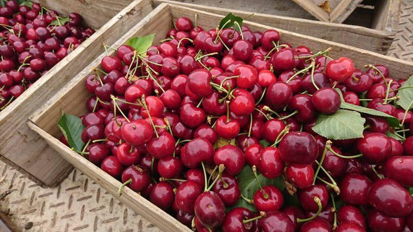Image courtesy of Kembla Fruit Orchard