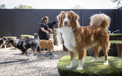 The best emergency and after-hours vets in Canberra