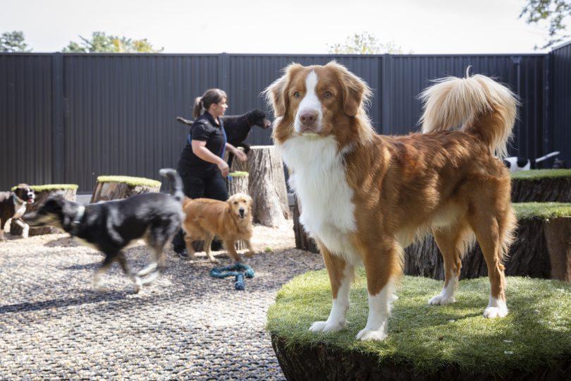 Tara Estate Pet Boarding