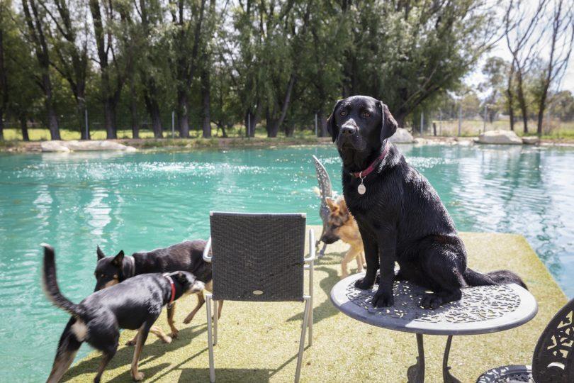 Dogs playing in water at Tara Estate Pet Boarding