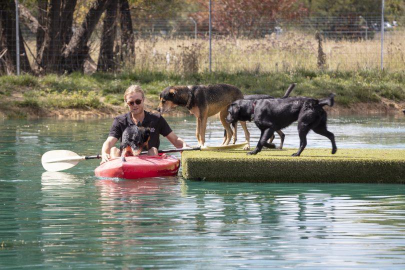 Dogs at Tara Estate Pet Boarding