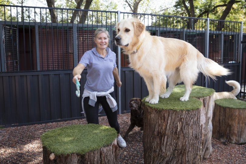 A dog standing on a pedestal at Tara Estate Pet Boarding