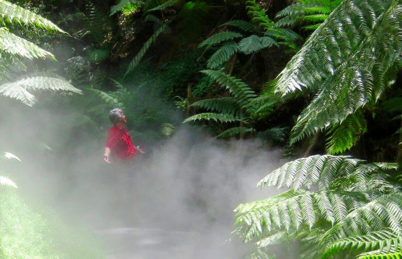Rainforest at the Australian National Botanic Gardens