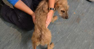 Oaks Estate man sentenced for starving six dogs