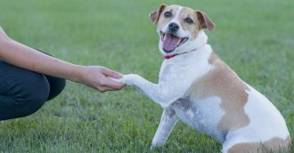 We put 5 of Canberra's dog parks to the test – which is your favourite?