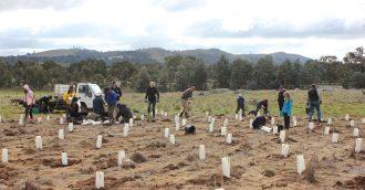 CSIRO Ginninderra Community Planting Day 1 of 2