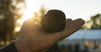 Top 6 not to be missed events at The Truffle Festival     Canberra Region