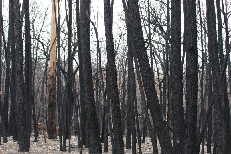 Cultural burning will take place on Aboriginal land at Tathra from June 19. Photo: Ian Campbell