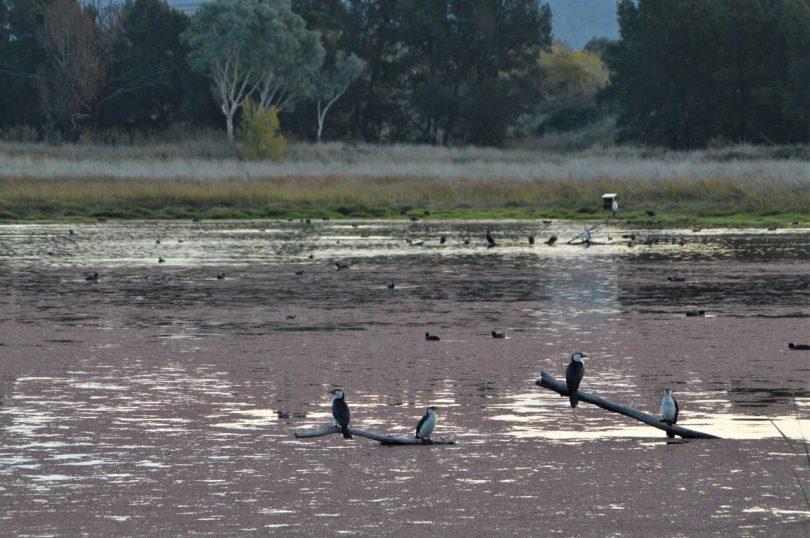Wetlands birdlife