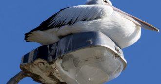 Canberra NatureMapr idea grows to include Shoalhaven and Eurobodalla