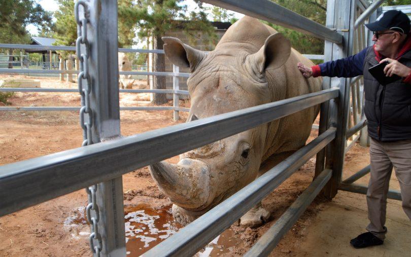 A Jamala guest pats a rhino.