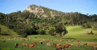 Deputy Mayor calls for a slow down in Eurobodalla   8216 Rural Lands  8217  process