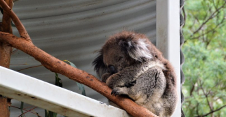 Canberra Day Trips: Experience an ACT animal adventure