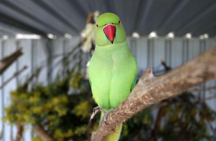 Green bird on perch