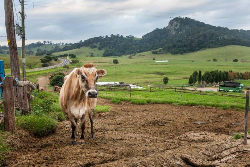 Like a postcard, the Dibden's Tilba jersey farm in greener times in 2016. Photo: Tilba Real Dairy.