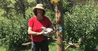 Chook Chat with Cheryl Nelson – Treats for your chooks this Christmas