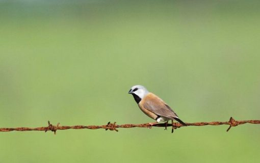 The 'Adani' Finch lives on in the Bega Valley