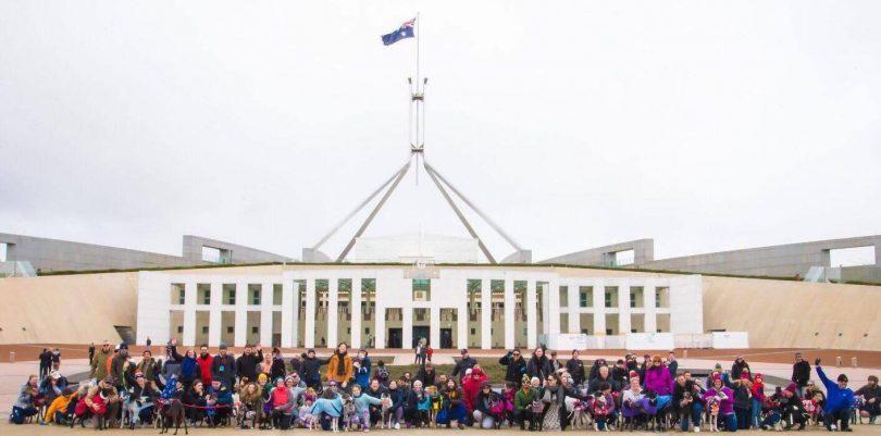 Last year's Global Greyhound Walk in Canberra. Photo: Claridge Photography..