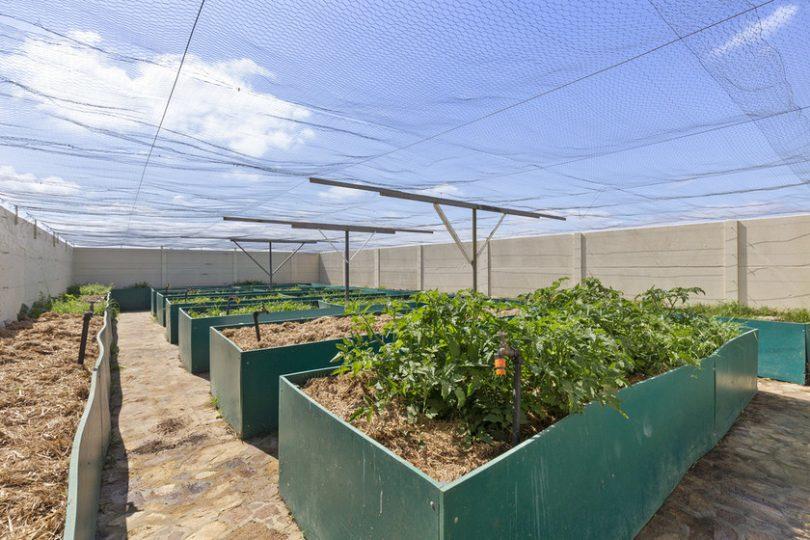 raised vegetable garden beds under bird netting outside.