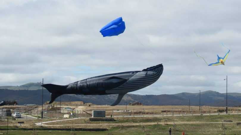 Yes, that is a giant whale kite and you can see it soar at the Googong Kite Fest this Father's Day! Photo: Facebook.