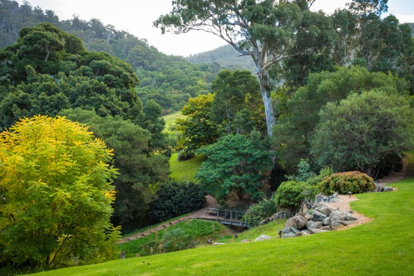 Terraced gardens and creek walks. Photo: Supplied