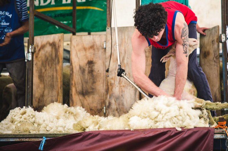 Shearer.