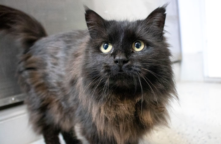 Cleo, cat of the week