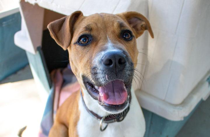 RSPCA Pet of the Week - Emma