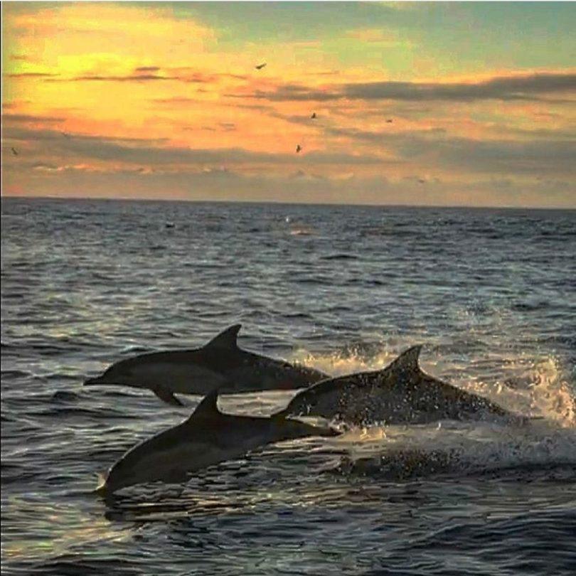 South Coast dolphins