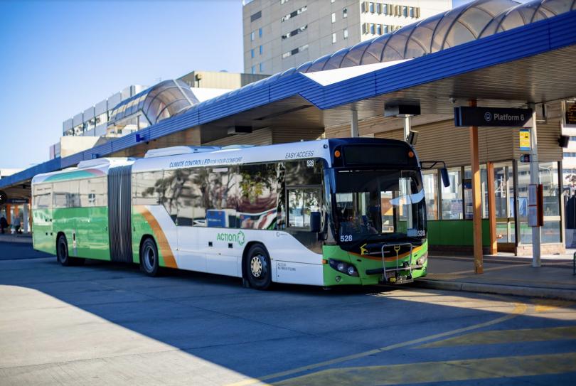 Transport Canberra buses