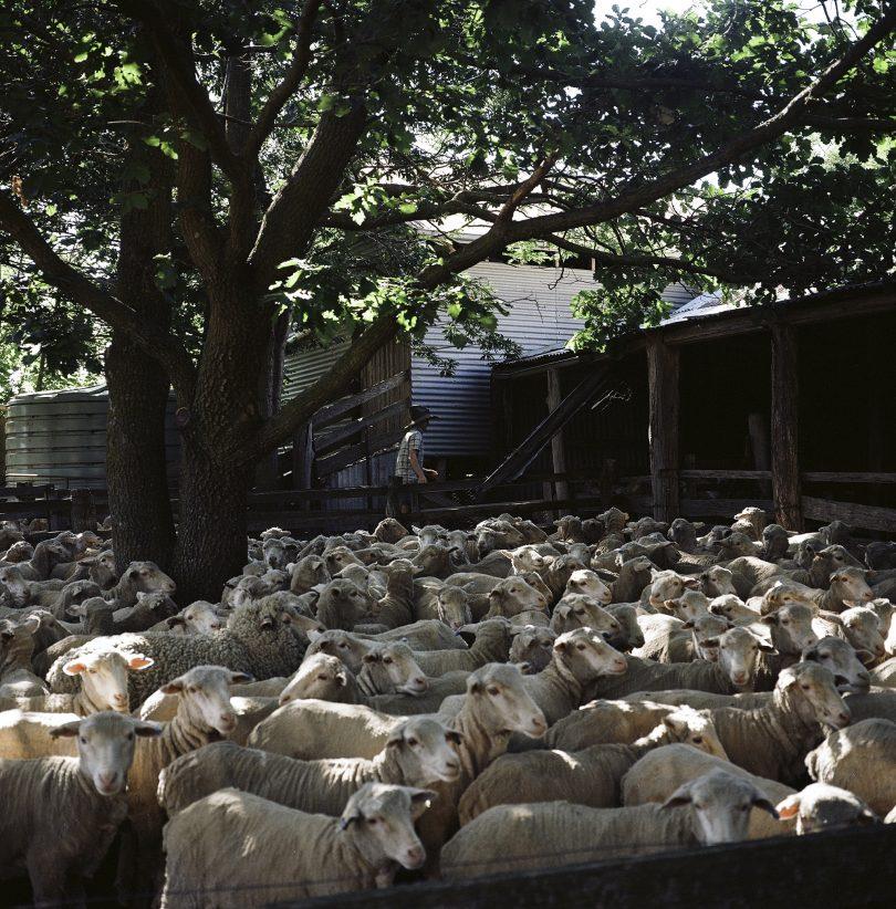 The Watsons farm