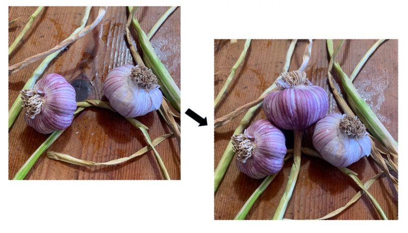 Knotting the garlic