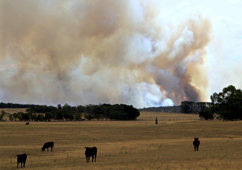 North Black Range fire