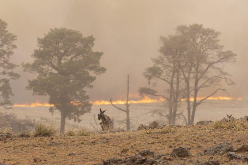 Pialligo fire January 2020