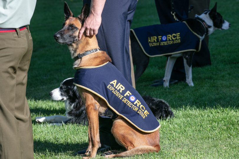 Air Force explosives detection dog