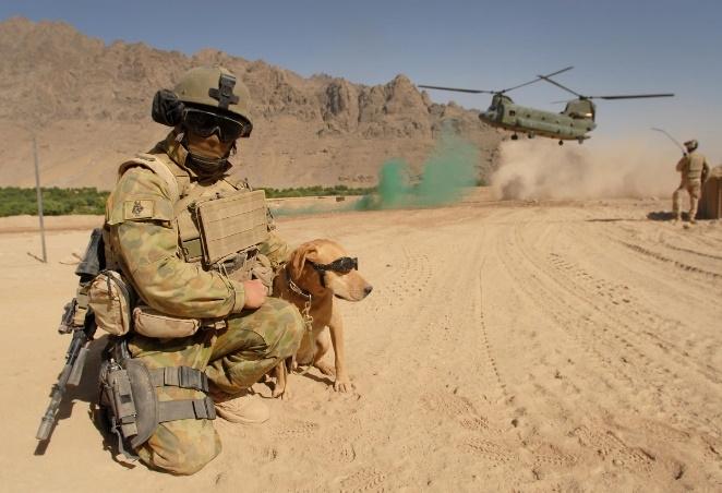 Military service dog Aussie